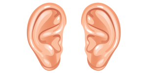 Ear-Download-PNG